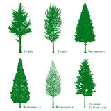Trees silhouettes. Trees 6 silhouettes ,green color,gingko, metasequoia and chinese tallow tree Stock Image