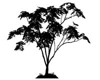 Trees silhouettes Royalty Free Stock Images