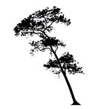 Trees silhouettes Royalty Free Stock Image