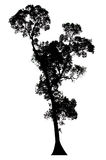 Trees silhouettes Royalty Free Stock Photography