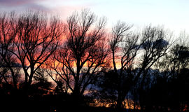 Trees silhouettes. Bare trees against a sunset background Stock Photo
