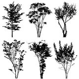 Trees silhouettes Stock Image
