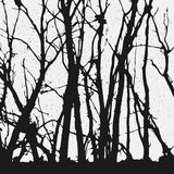 Trees silhouettes. Trees and branches silhouette isolated on white background Royalty Free Stock Images