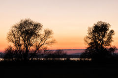 Trees silhouettes at dusk Stock Image