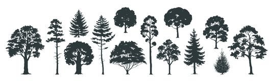 Trees silhouettes. Forest and park pines firs and spruces, coniferous and deciduous trees. Vector isolated nature set. Trees silhouettes. Forest and park pines stock illustration