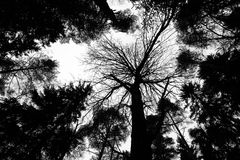 Trees silhouettes perspective Stock Image