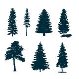 Trees silhouettes. Set of pine trees silhouettes, stock vector Royalty Free Stock Image