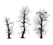 Trees silhouettes. Vector. Royalty Free Stock Images