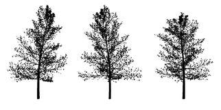 2 trees silohettes. Realistic image of three silohuettes of a tree Stock Photos