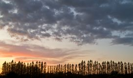 Trees silouhette against a sunset sky Royalty Free Stock Photo
