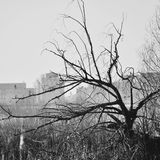 Black and whit tree Stock Photo