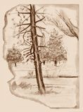 Trees sketch. Vintage sketchbook page with trees sketch. Pen drawing Royalty Free Stock Photo