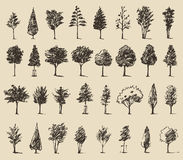 Trees sketch set, vintage vector style, hand drawn Stock Photography