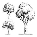 Trees sketch vector. Icon isolated Royalty Free Stock Photos