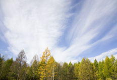 Trees and sky Royalty Free Stock Photos