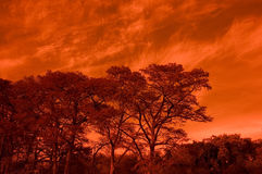 Trees and Sky. With an abstract background Royalty Free Stock Photo