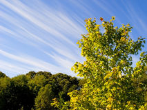Trees and Sky. View of late summer trees with streaky clouds in blue sky Royalty Free Stock Image