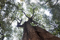 Trees and sky. Top view in forest - trees and sky Royalty Free Stock Photography