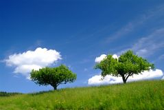 Trees and sky. Trees with clouds and blue sky royalty free stock images
