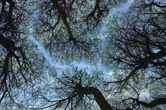 Trees and the sky. The sky through the tree branches royalty free stock photography
