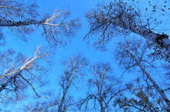 Trees and sky Royalty Free Stock Photography