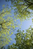 Trees and Sky Royalty Free Stock Images