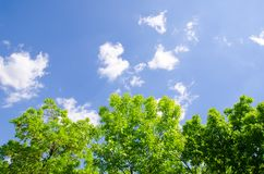 Trees and sky Royalty Free Stock Photo
