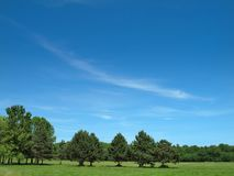 Trees and Sky Stock Image