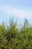 Trees and sky Stock Photo