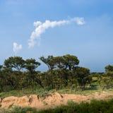 Trees and sky. Trees near the desert of Kubuq, Inner Mongolia, China royalty free stock photo