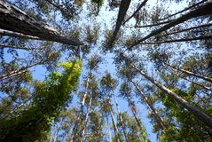 Trees on the sky Stock Photography