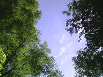 Trees and sky. Trees growing in the sky Stock Photography