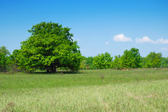 Trees and sky. Field with trees and blue sky Royalty Free Stock Image