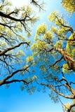 Trees in sky Stock Photo
