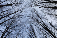 Trees on sky background Stock Image