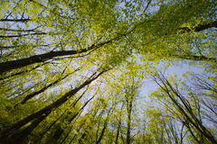Trees and sky from below Royalty Free Stock Image