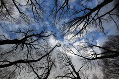 Trees on sky blue background Royalty Free Stock Photography