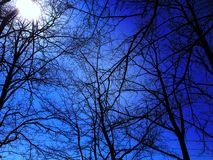 Trees and sky with bright sun Royalty Free Stock Images
