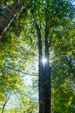 Trees and sky Royalty Free Stock Photos
