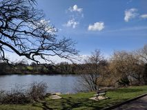 Landscape view at moat park, Maidstone, Kent, Medway, UK United Kingdom. Trees, sky clouds bark, lovely day sun bright. Bench, pier, fishing lake , clouds white Royalty Free Stock Image