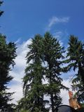 Trees sky. Clouds nature evergreen Stock Images