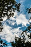 Trees and the sky. Dark trees and the blue sky with wight clouds Royalty Free Stock Photography