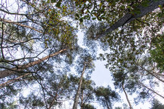 Trees in the sky Stock Photography