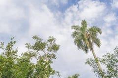 Trees and Sky at Iguazu Park Royalty Free Stock Photo
