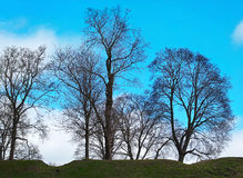 Trees and sky. Royalty Free Stock Photo