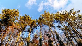 Composite of trees and the sky. stock photography