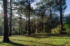 Trees and sky at Mount Lofty Botanic Gardens Stock Photography