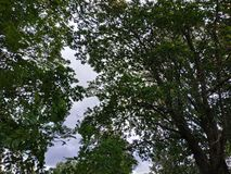 Trees and sky at nature stock image