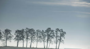Trees on the sky Royalty Free Stock Images