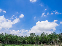 Trees with sky. On sunny day royalty free stock photo